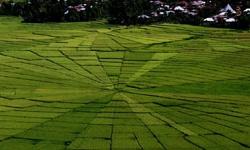 spider-field.jpg