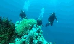 dive course 6.jpg