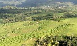 terrace-field.jpg