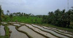 Sapit-terrace-field